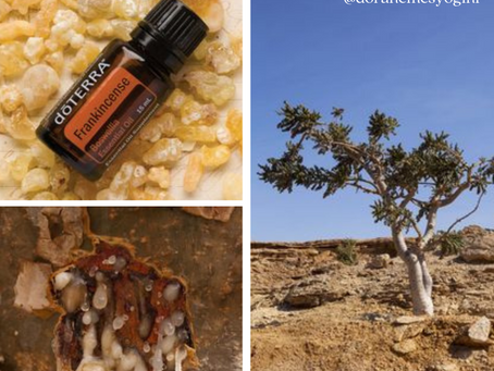 The Oil of December: Frankincense