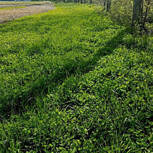 Logging Trail Blend 25lbs. (1.5 acres)