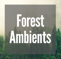 Forest Amp.png