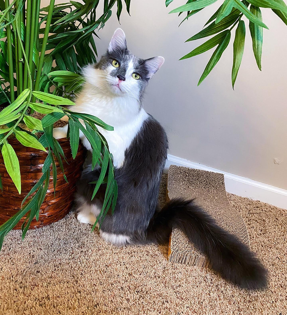 Gray and White Cat with Plant