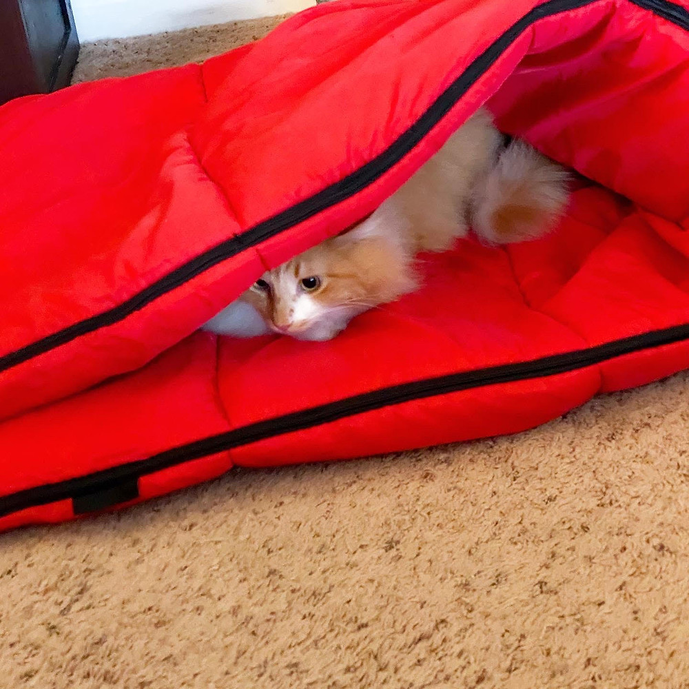 Maine Coon Glamping