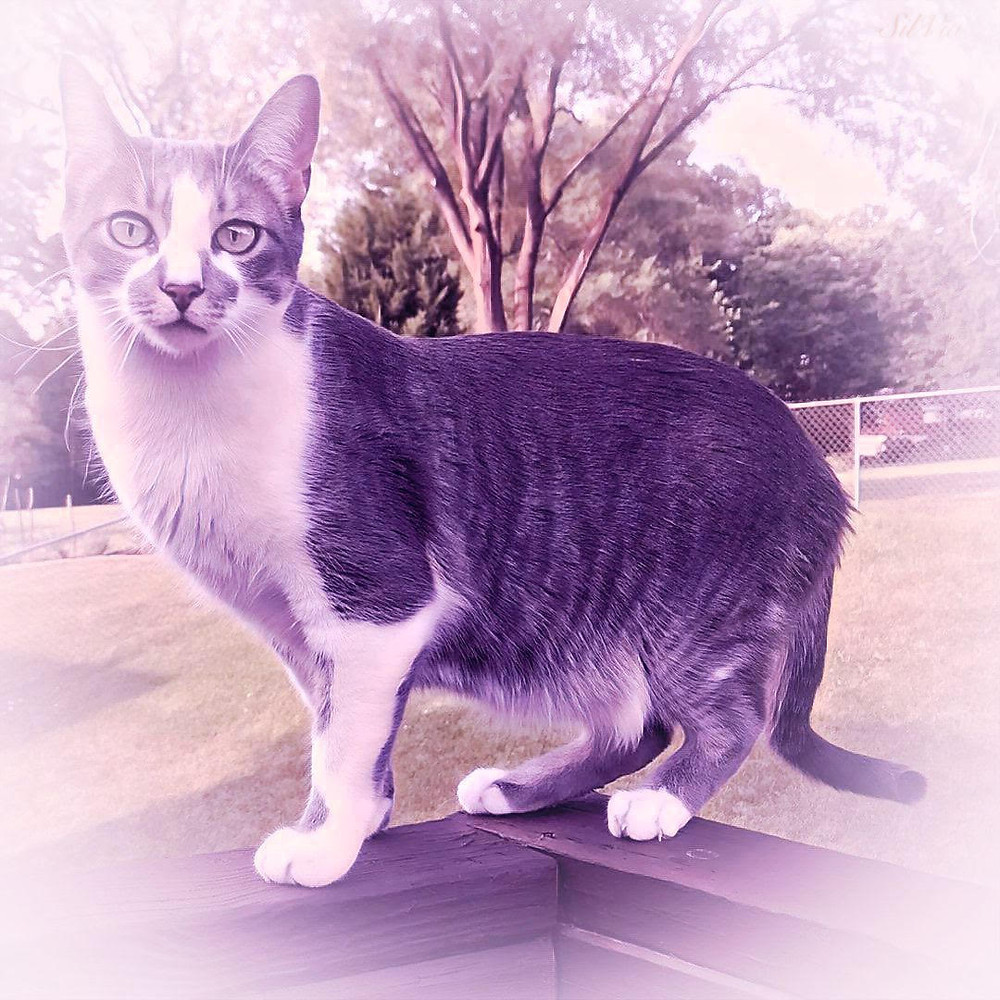 Gray and White Tabby Cat Outside