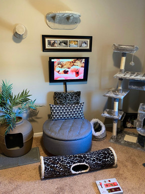 Our Cat Playroom