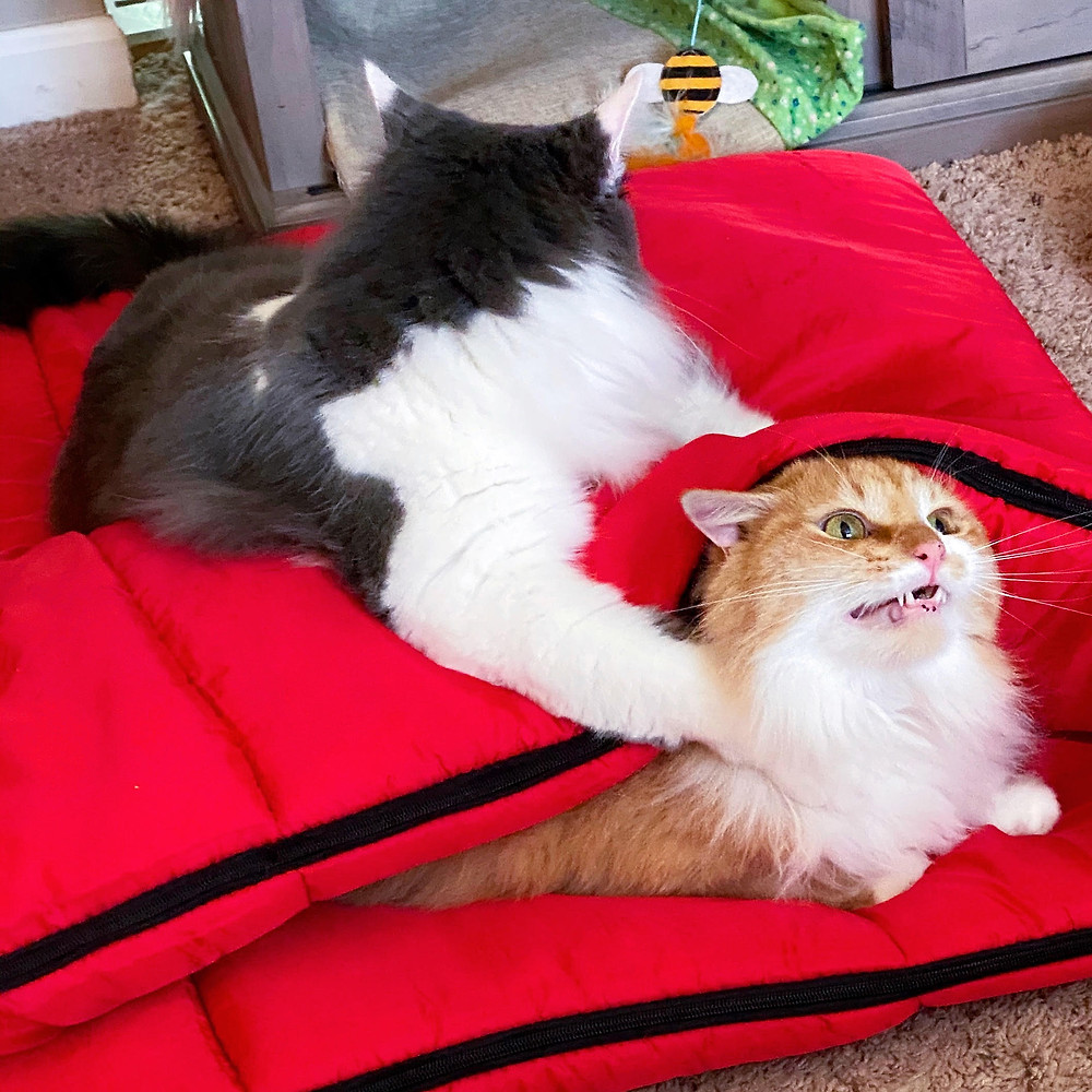 Cats Glamping