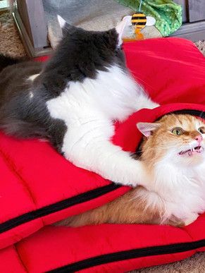 Did You Know Cats Love Glamping??