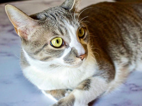 Litter Box Issues, UTIs, & Urinary Blockages in Cats