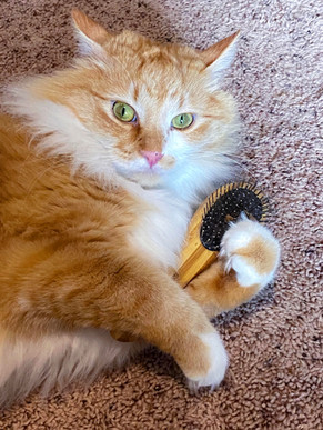 HELP!! My Cat Hates Getting Brushed!