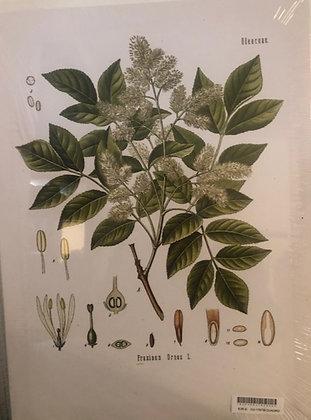 Cuadro botanico 2