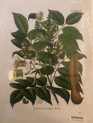Cuadro botanico 3