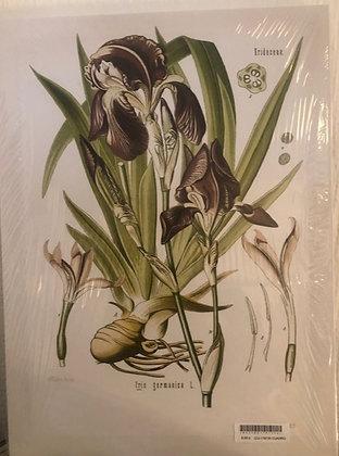 Cuadro botanico 5