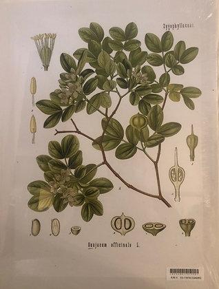Cuadro botanico 6