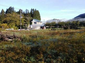 さくらんぼの果樹園として営んでいた秋田の畑、お譲りします