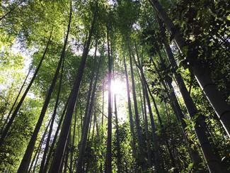 京都市街地に隣接している山林、春にはタケノコが掘れます