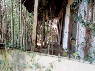 雑木林と化した朽ち果てた古屋付きの岡山市内の土地売ります