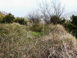 父が使ってた山口の畑売ります、果樹栽培が楽しめます