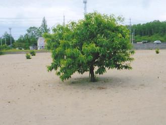 栗の木が数本あるだけの秋田の広い土地です、畑や資材置き場で使っていました