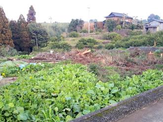 以前より所有していた熊本の土地、古井戸と伐採した木や切り株があります