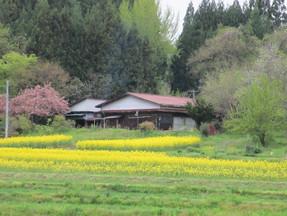 田畑の管理が大変になってきて売りに出しました、本当によい方々にめぐり合い感謝です
