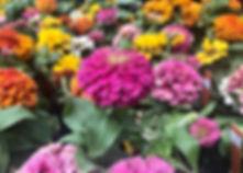 zinnia, cut flowers, cutting garden