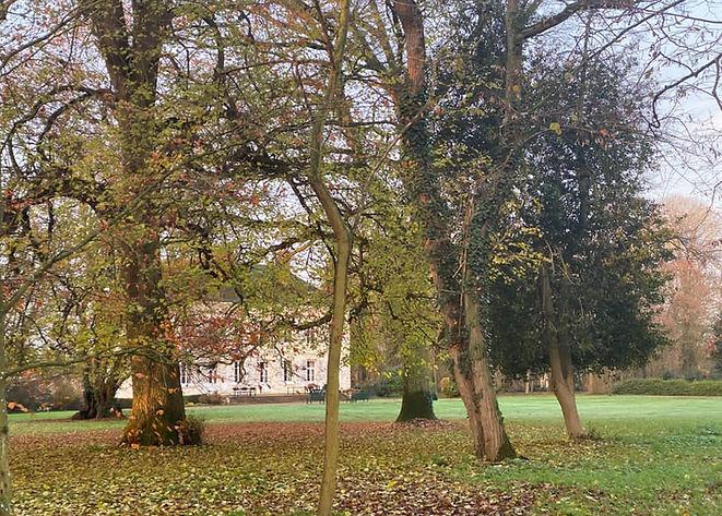 arbres et maison.JPG
