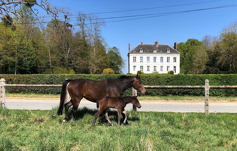 chateau avec chevaux.JPG