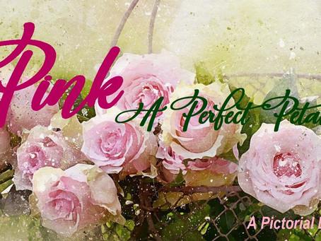 Pink - A Perfect Petal