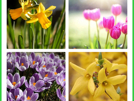 Inspirations of Spring