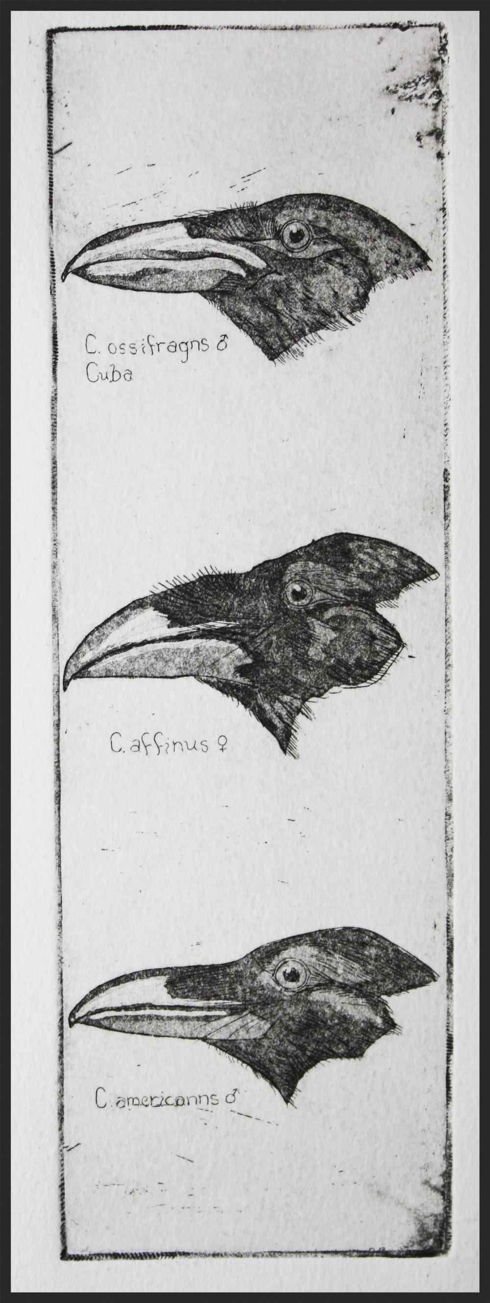 Maggie Robertson etching