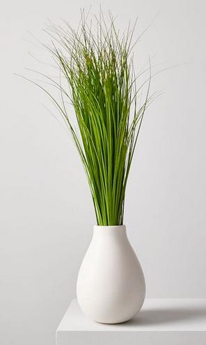 Faux onion grass