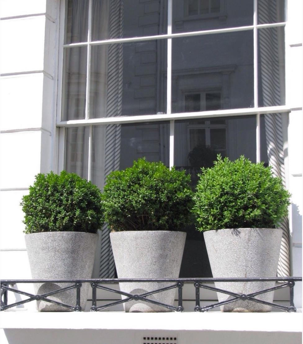 boxwood window planters