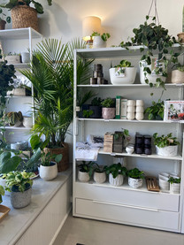 House Plant 101 with LoKey Designs