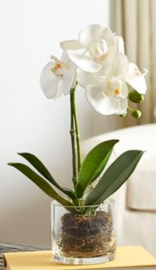 Faux Orchic in glass vase