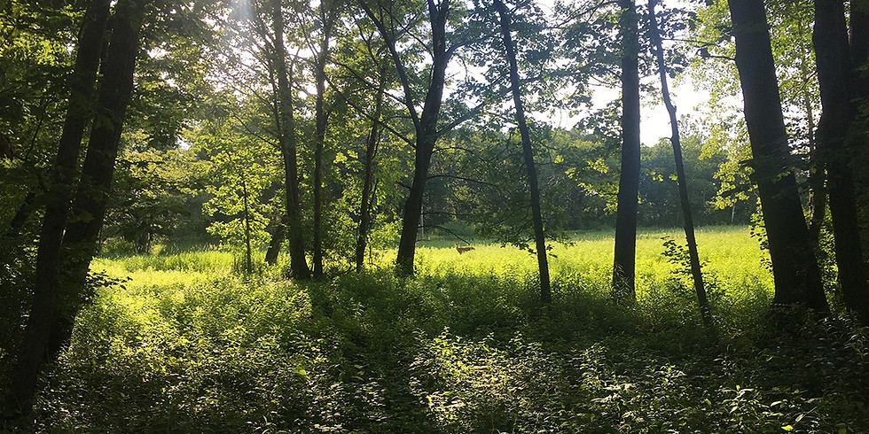 Managing Forests to Enhance Carbon Storage