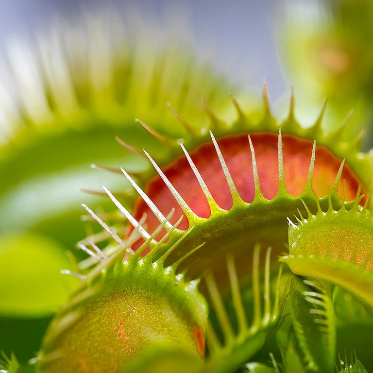 Creating a Small Bog Garden for Carnivorous Plants
