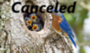 Blue Birds (2).jpg
