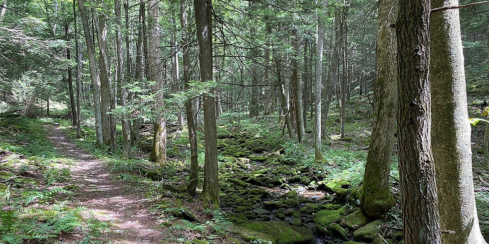 Know Your Woods: Tree ID and Intro to Forest Ecology