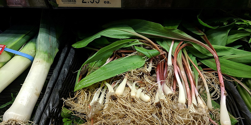 Ramp/Wild Leek Foraging and Forest Farming: Identification, Uses, and Importance