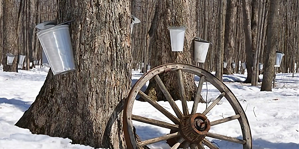 Getting Started in Maple Syrup