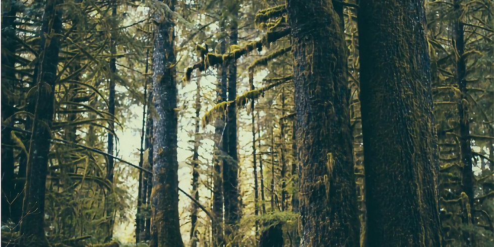 Fostering Old Forest Conditions Through Structural Complexity Enhancement