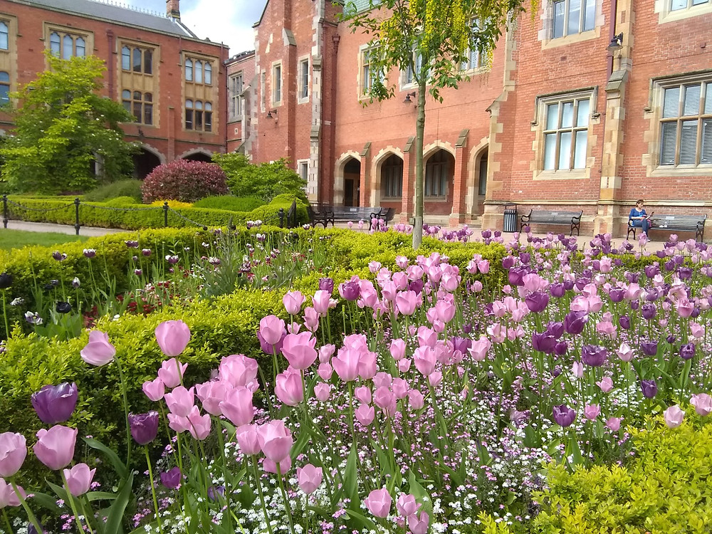 Pink and purple tulips in Lanyon inner courtyard.