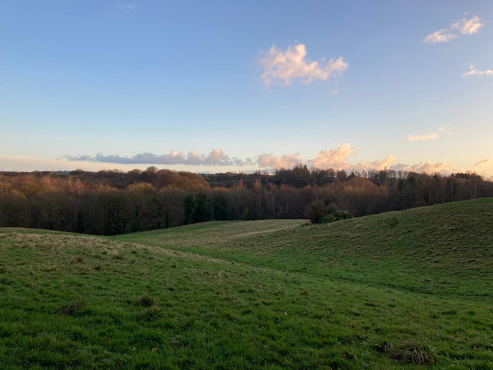 Rolling hills and blue skies with a line of trees in the distance