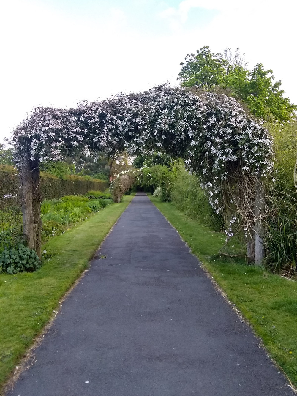 A flowering archway in Botanic Park.