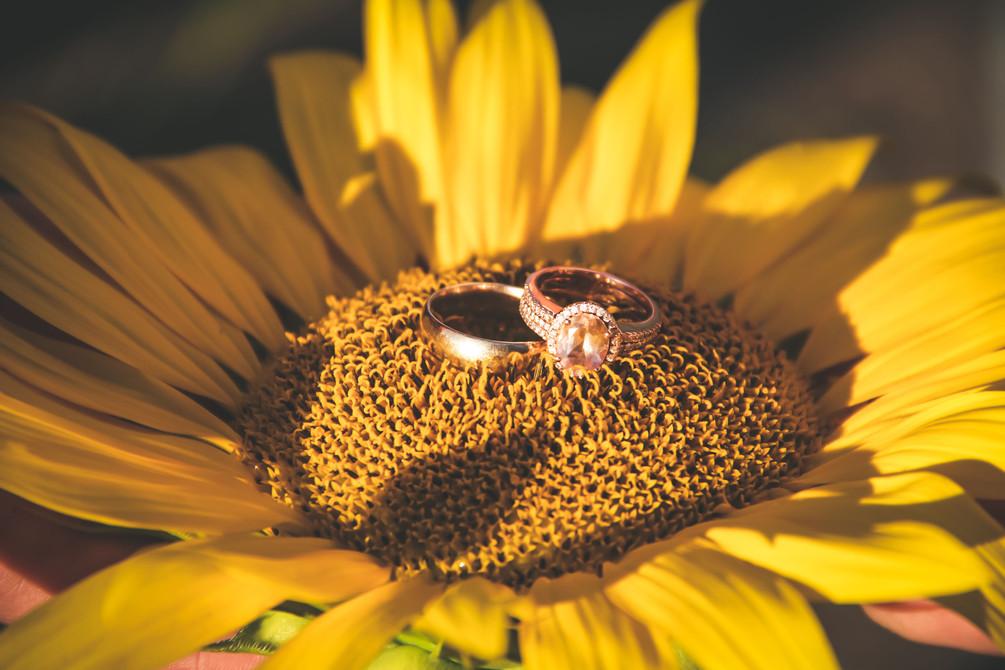 HarleyKalebSunflowers-1393.jpg
