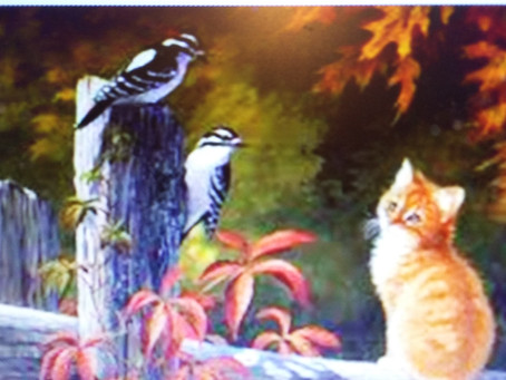 Cat loves Bird