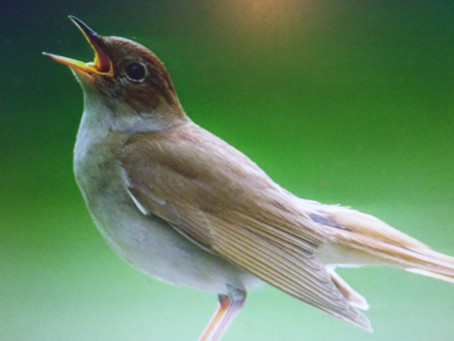 Three ways a Nightingale can inspire you