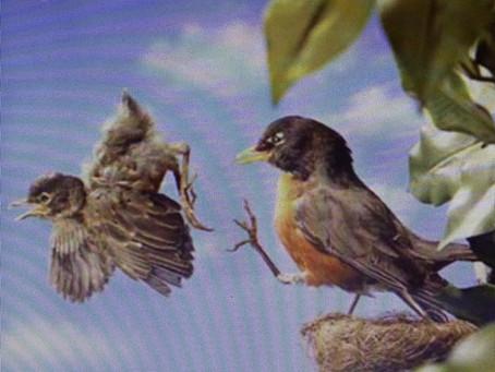 """""""She flies like a bird in the sky–ay-ay"""" (Honeybus)"""