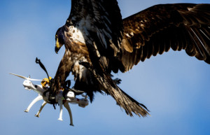 Dogfight: Start-ups take aim at errant drones – <em>Jeremy Wagstaff & Swati Pandey</em>