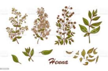 Henna: A natural alternative to hair dye