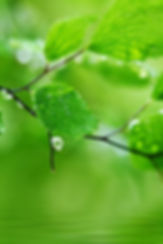 Green-Nature-Hd-Images--Pics-Widescreen-