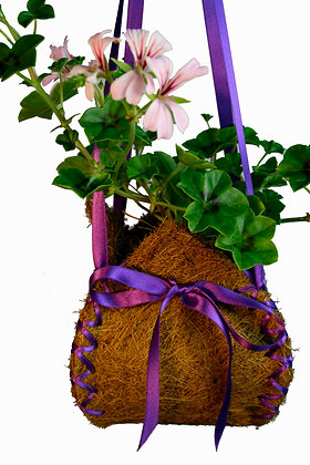 Purple Coco Loco Pack